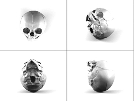 3D scans of a human skull