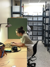 Student at a desk with specimens